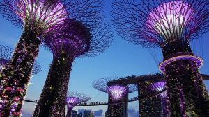 singapore garden by the bay 503897 640